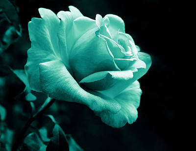 Photograph - Midnight Rose Flower In Teal by Jennie Marie Schell