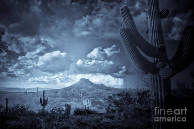Photograph - Midnight Saguaro At Browns Ranch Mcdowell Sonoran Preserve by Marianne Jensen