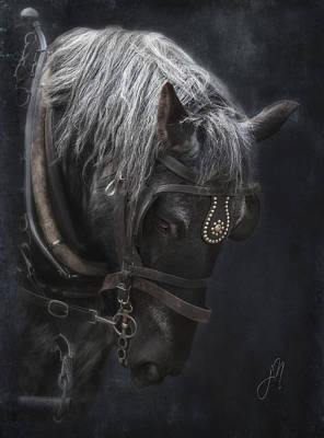 Photograph - Midnight Silver by Judy Neill