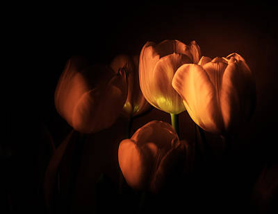 Photograph - Midnight Tulips by Julie Palencia