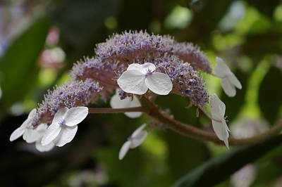 Photograph - Midsummer Bloom by Christine Burdine