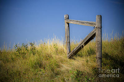 Photograph - Midsummer's Dream by Dee Cresswell