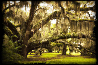 Beach Photograph - Mighty Live Oak by Barbara Kraus - Northrup