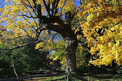 Mystifying Photograph - Mighty Oak by Allen Beatty