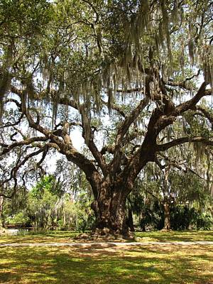 Art Print featuring the photograph Mighty Oak by Beth Vincent