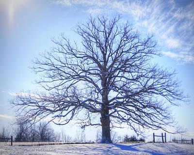Mighty Oak Photograph - Mighty Oak In Winter by Cricket Hackmann