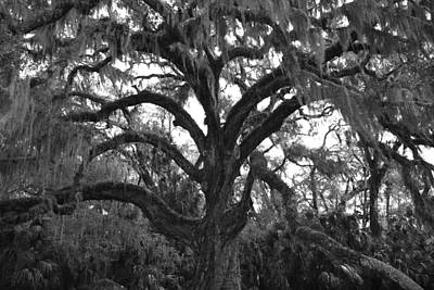 Photograph - Mighty Oak by Kimberly Oegerle