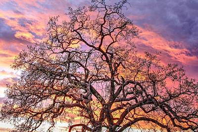 Ojai Wall Art - Photograph - Mighty Oak Tree At Sunset by Liz Vernand