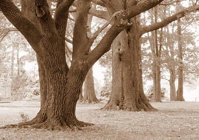 Whalen Photograph - Mighty Oaks by Jim Whalen