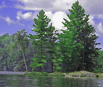 Photograph - Mighty Pines by Ian  MacDonald