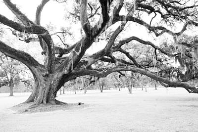 Photograph - Mighty Southern Oak by Audreen Gieger