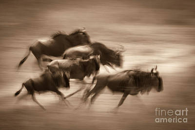 Photograph - Migration Dream by Chris Scroggins