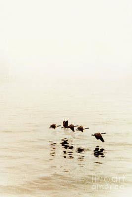 Low Wing Photograph - Migration by Margie Hurwich
