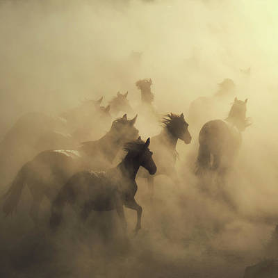 Running Horses Photograph - Migration Of Horses by H??seyin Ta??k??n