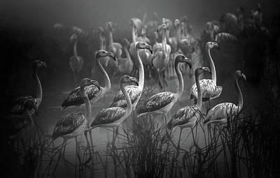 Flamingos Photograph - Migrations ! by Fernando Jorge Gon?alves