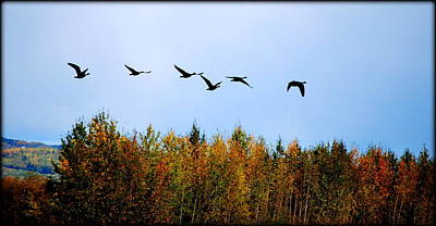 Photograph - Migratory Flight by Kathy Sampson
