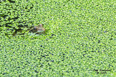 Photograph - Mike Moat's Frog by Peg Runyan