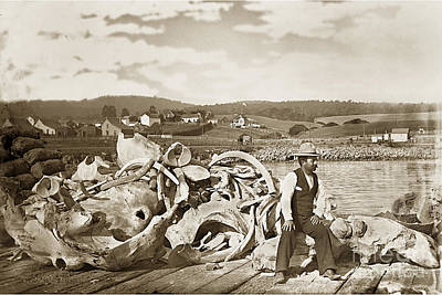 Photograph - Mike Noon Monterey Whaler On Montereys Wharf  Circa 1890 by California Views Archives Mr Pat Hathaway Archives