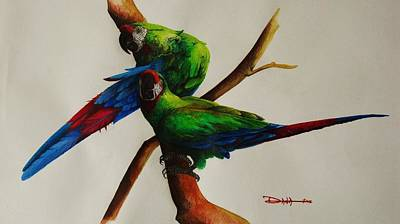 Macaw Drawing - Military Macaws by Dana Newman