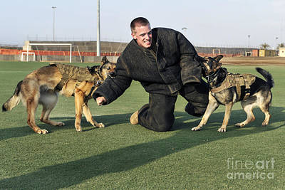Attack Dog Photograph - Military Working Dogs Subdue A Handler by Stocktrek Images