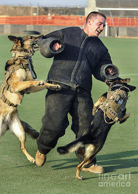 Attack Dog Photograph - Military Working Dogs Take by Stocktrek Images