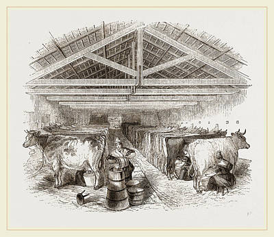 Milking-shed Art Print by Litz Collection
