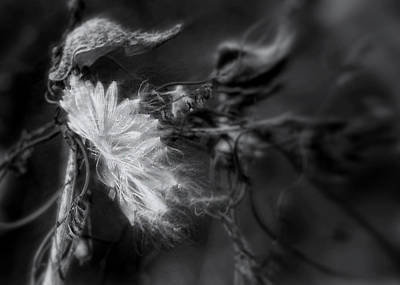 Photograph - Milkweed by Louise Kumpf