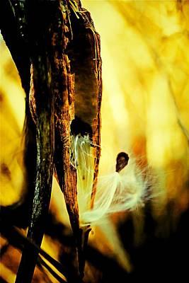 Fuzzy Digital Art - Milkweed Pod Fantasy by Beth Akerman