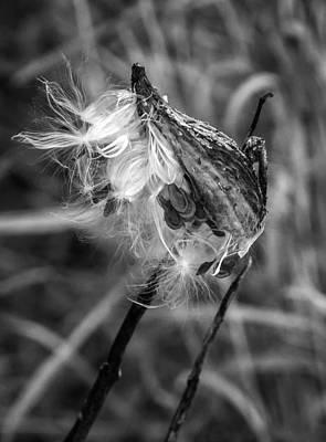 Flora Photograph - Milkweed Pod Monochrome by Steve Harrington