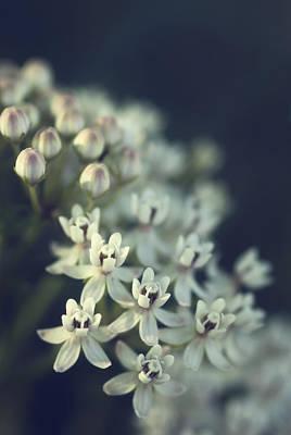 Photograph - Milkweed  by Saija  Lehtonen