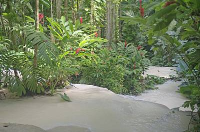 Photograph - Milky River And Florals In Ocho Rios Jamaica by Willie Harper