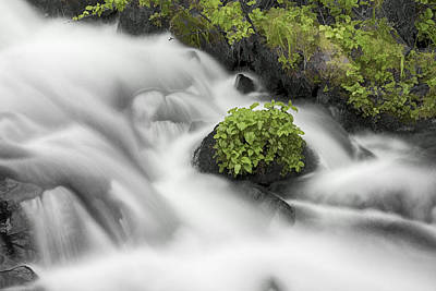 Photograph - Milky Stream by Wes and Dotty Weber