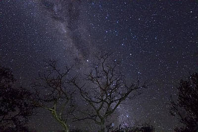 Photograph - Milky Way During The Dry Season by Piotr Naskrecki