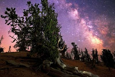 Bristlecone Pine Photograph - Milky Way Over Bristlecone Pines by Babak Tafreshi
