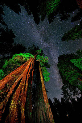 Milky Way Over Giant Sequoias Art Print