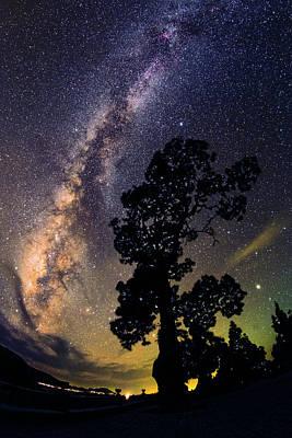 Planets Photograph - Milky Way Over Pine Tree by Babak Tafreshi