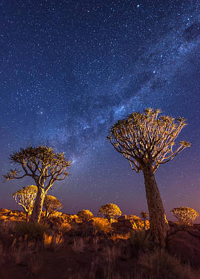 Aloe Painting - Milky Way Over Quiver Trees - Namibia Night Photograph by Duane Miller