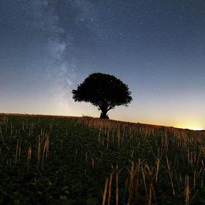 Moonlit Photograph - Milky Way Over Tree by Laurent Laveder