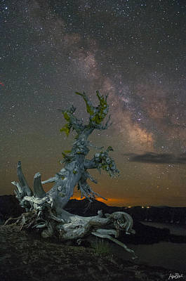 Milky Way Tree Art Print by Abe Blair