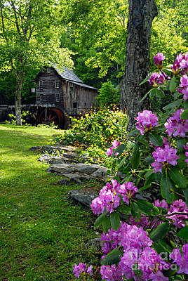 Mill And Rhododendrons Art Print by Larry Ricker