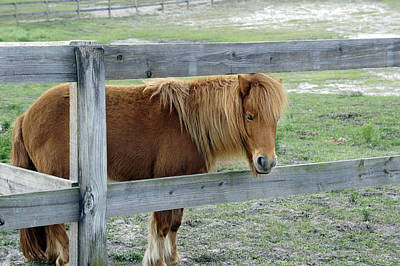 Photograph - Mill Creek Pony by Laurie Perry
