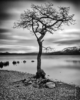 Millarochy Tree Loch Lomond Art Print
