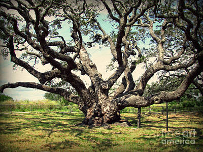 Photograph - Millennium Live Oak - Big Tree At Goose Island by Ella Kaye Dickey