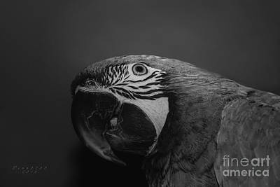 Photograph - Milligold Macaw by Melissa Messick