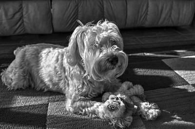 Photograph - Milo And His Baby 2 by Cathy Jourdan