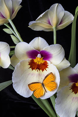 Pretty Orchid Photograph - Miltonia Orchid With Orange Butterfly by Garry Gay