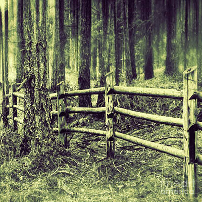 Photograph - Mima Mounds Forest Fence by Jean OKeeffe Macro Abundance Art