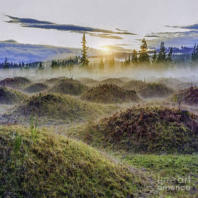 Mima Mounds Mist Art Print