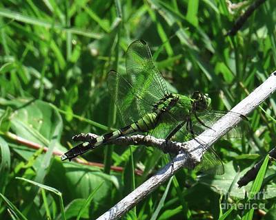 Dragonfly Photograph - Mimicry by Scott Cameron