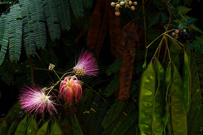 Photograph - Mimosa And Peppervine by Jason Politte